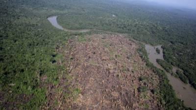 Desflorestação da Amazónia aumenta num ano 29,5% no Brasil